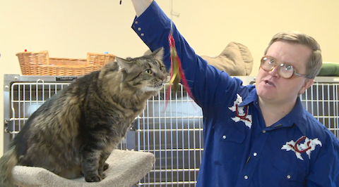 Big Louis is Bubbles Kitty of the Week at SwearNet