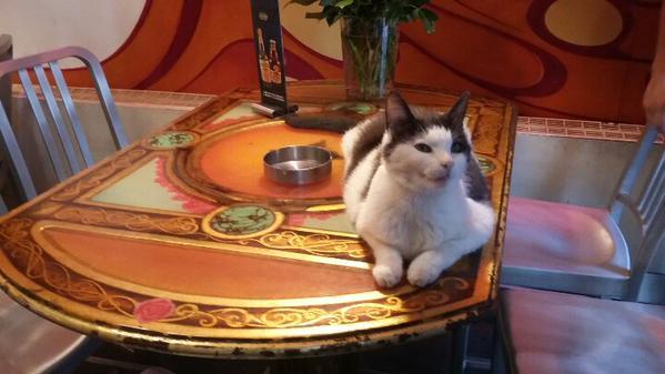 Kitty de Damkring coffee shop, Amsterdam