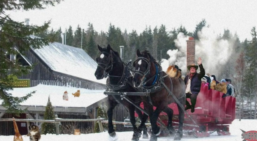 Bubbles is on a winter cowboy adventure with his kitties